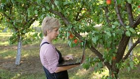 Agronomist in apricot orchard Stock Photo