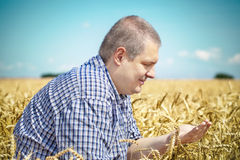 Agronomist on cereals field Stock Photos