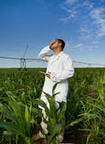 Agronomist in corn field Stock Image