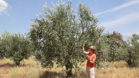 Agronomist examine olive tree Stock Photo