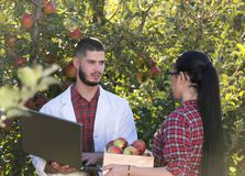 Agronomist and farmer in apple orchard