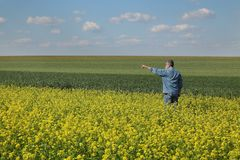 Farmer inspecting rapeseed crop in field Royalty Free Stock Photo