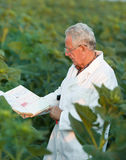 Agronomist in field Royalty Free Stock Photos