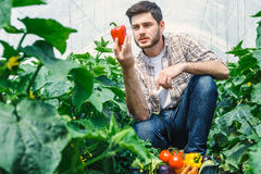 Agronomist holding vegetables in a greenhouse Stock Image