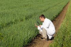 Agronomist in onion field Royalty Free Stock Images