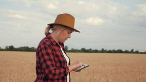 The agronomist records and looks at the harvest of wheat. Writing data to the tablet. The agronomist records and looks at the harvest of wheat. Write data to the stock video footage