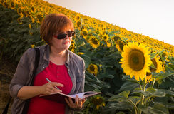 Agronomist in sunflower field. Agriculture, female farmer or agronomist in sunflower field Royalty Free Stock Photography