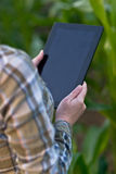 Agronomist with tablet computer in corn field Royalty Free Stock Photography