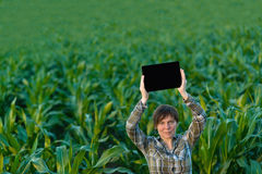 Agronomist with tablet computer in corn field Royalty Free Stock Photos