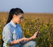 Agronomist with tablet in soybean field Royalty Free Stock Photo