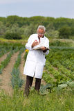 Agronomist in vegetable garden Royalty Free Stock Photography
