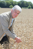 Agronomist in wheat field Stock Image