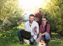 Agronomit e agricoltori nel meleto Immagine Stock