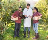 Agronomit i rolnicy w jabłczanym sadzie Fotografia Stock