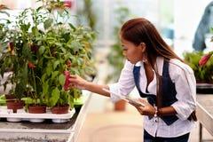 Agronomo abbastanza asiatico della donna dei giovani con la compressa che funziona nella serra che ispeziona le piante Immagini Stock