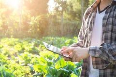 Agronomo che per mezzo del computer della compressa sul campo di agricoltura immagini stock libere da diritti