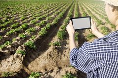 Agronomo che utilizza una compressa digitale in un campo di agricoltura fotografia stock
