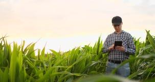 Agronomo con il computer della compressa nel campo vuoto nudo nel tramonto, uomo sicuro serio dell'agricoltore facendo uso di tec stock footage