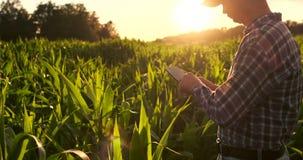 Agronomo con il computer della compressa nel campo vuoto nudo nel tramonto, uomo sicuro serio dell'agricoltore facendo uso di tec video d archivio