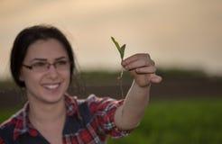 Agronomo della donna che prende cura dei germogli nel campo Fotografie Stock