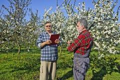 Agronomo e agricoltore nel frutteto Immagini Stock