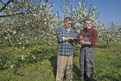 Agronomo e agricoltore nel frutteto Fotografie Stock