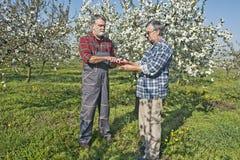 Agronomo e agricoltore nel frutteto Immagini Stock Libere da Diritti