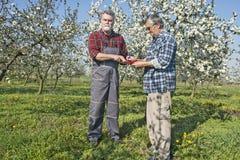 Agronomo e agricoltore nel frutteto Fotografia Stock Libera da Diritti