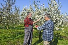 Agronomo e agricoltore nel frutteto Immagine Stock