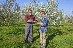 Agronomo e agricoltore nel frutteto Fotografia Stock