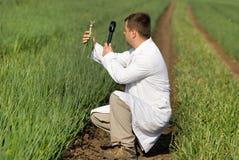 Agronomo nel campo della cipolla Fotografia Stock Libera da Diritti