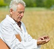 Agronomo nel giacimento di grano Immagini Stock Libere da Diritti
