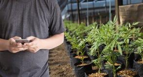 agronomo Using dell'uomo di concetto di tecnologia di agricoltura una compressa dentro Immagini Stock