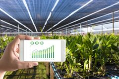 agronomo Using dell'uomo di concetto di tecnologia di agricoltura una compressa dentro Immagine Stock Libera da Diritti