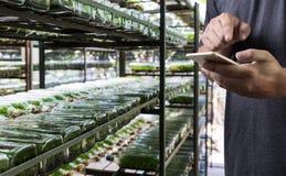 agronomo Using dell'uomo di concetto di tecnologia di agricoltura una compressa dentro Fotografia Stock Libera da Diritti