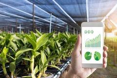 agronomo Using dell'uomo di concetto di tecnologia di agricoltura una compressa dentro Immagine Stock