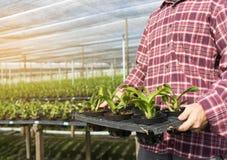 agronomo Using dell'uomo di concetto di tecnologia di agricoltura una compressa dentro Fotografie Stock