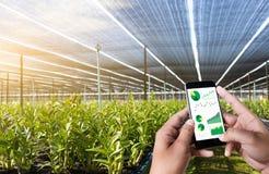 agronomo Using dell'uomo di concetto di tecnologia di agricoltura una compressa dentro Fotografia Stock