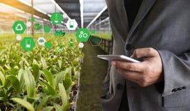 agronomo Using dell'uomo di concetto di tecnologia di agricoltura una compressa Int Immagine Stock Libera da Diritti