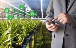 agronomo Using dell'uomo di concetto di tecnologia di agricoltura una compressa Int Fotografia Stock Libera da Diritti