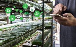agronomo Using dell'uomo di concetto di tecnologia di agricoltura una compressa Int Immagini Stock