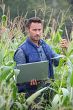 Agronomy. Agronomist analysing cereals with laptop computer stock photography