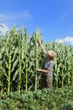Agronomy Stock Photo