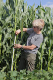 Agronomy. Female agricultural expert inspecting quality of corn royalty free stock images