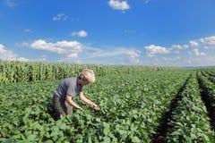 Agronomy Stock Image