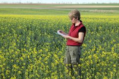 Agronomy. Agricultural expert inspecting quality of oil stock photos