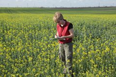 Agronomy. Agricultural expert inspecting quality of oil in field stock photos