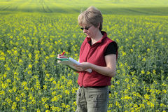 Agronomy, oilseed. Agricultural expert inspecting quality of oil royalty free stock photos