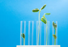 Agronomy researching. Test tubes with green plants stock image