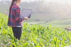 Agronoom die graangewassen met laptop computer analyseren stock foto